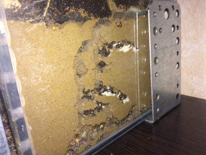 Песочный формикарий