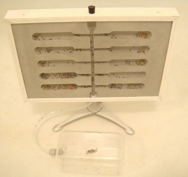 Вертикальный формикариум на подставке и с ареной