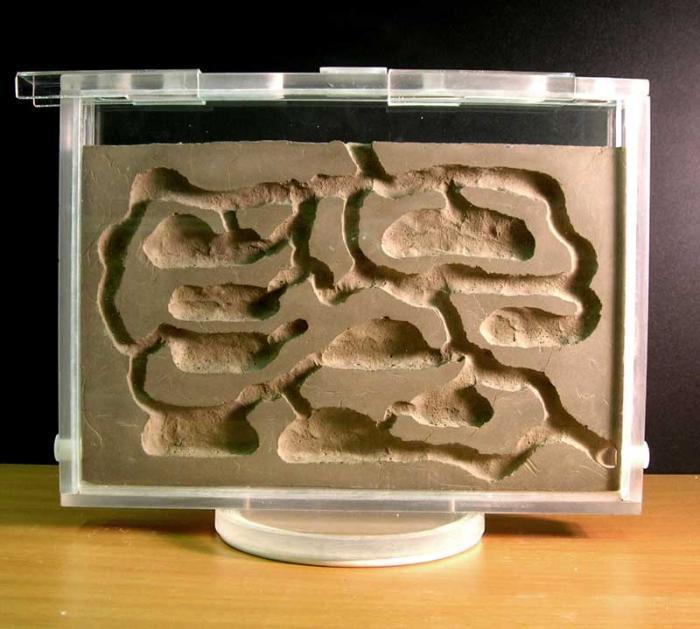 Вертикальный формикарий из оргстекла