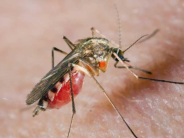 Опасные насекомые средней полосы