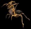 Аватар пользователя crawler