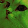 Аватар пользователя Sofirus