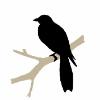 Аватар пользователя Meerkat