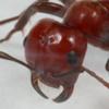 Аватар пользователя ptah