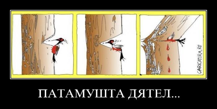 Сказка про дятла PATAMUSHTA_DYATEL___