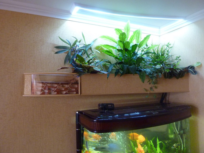 Видео фитофильтр для аквариума своими руками
