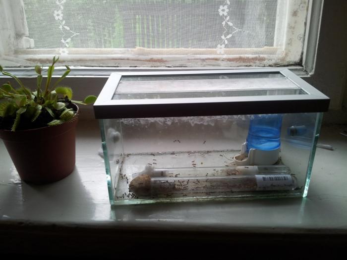 аквариум на подоконнике фото локальную тесноту