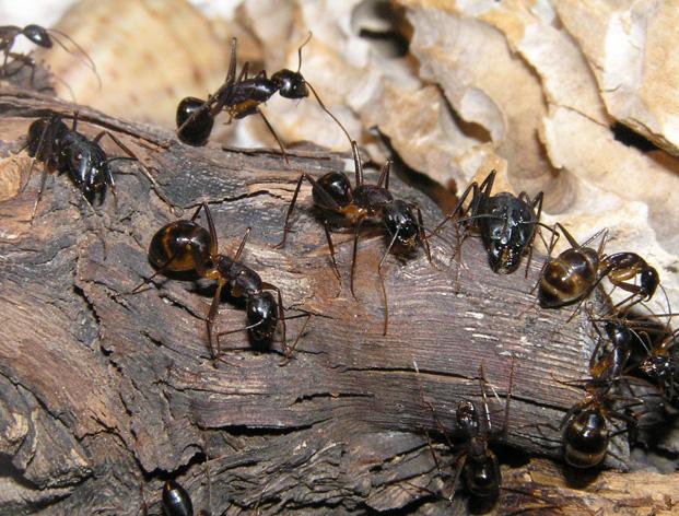 Много муравьев фото